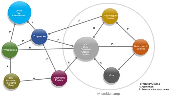 The Reef Aquarium as a System. Nutrients Flow
