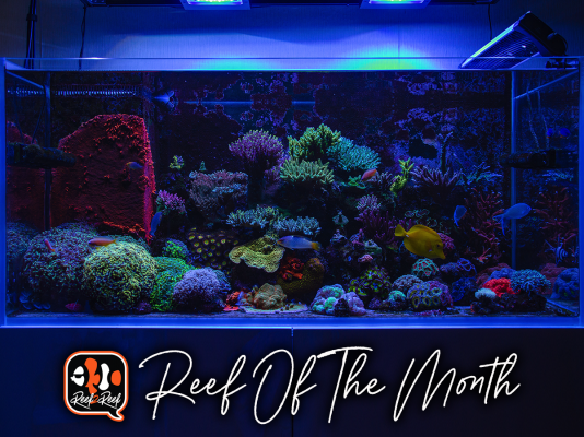 REEF OF THE MONTH - September 2021: Vitaliy's Stunning 300-Litre Mixed Reef