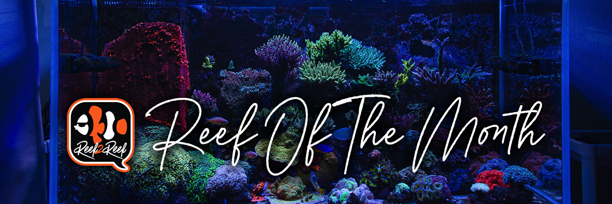 Reef of the month footer.png
