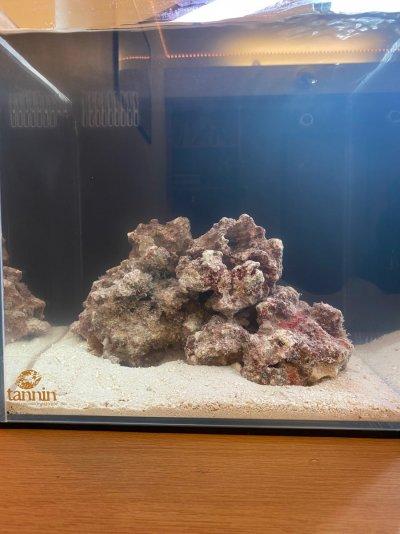 UNS 30a Caribbean Reef.jpg