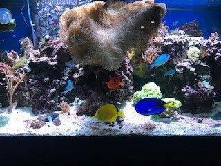 fish 2019 2.jpg