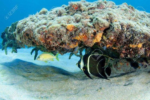 -reef-ledge-.jpg