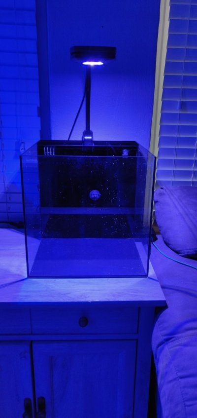 Waterbox 10 gallons with ai prime hd light