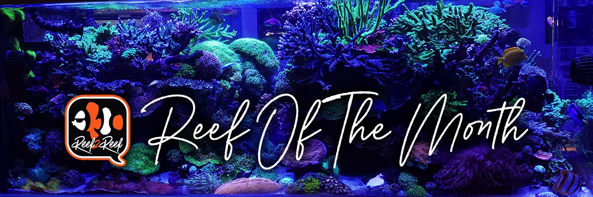 REEF OF THE MONTH - October 2021: Charlie's Amazing 400-gallon Reef