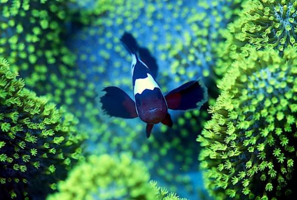 Choosing Corals for Your First Reef Tank