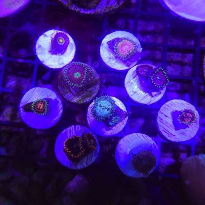 Zoa Pack: venom, princess strat, wolverine, marvin the martian, and more