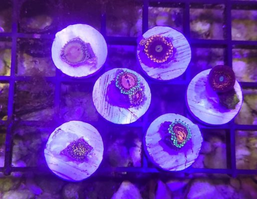 Zoa 6-Pack: Frankie's Acid Trip, Marvin the Martian, and more