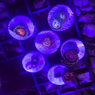 Zoa 6-pack: Wolverine, Marvin the Martian, Princess Strats + others