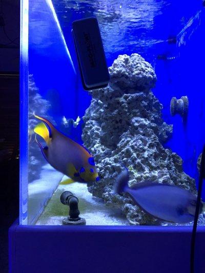 Puffers eels tang angel fish