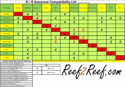 Anemone Compatibility Spreadsheet!