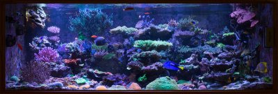 Dr. Joshi's 500 Gallon SPS dominated mixed reef