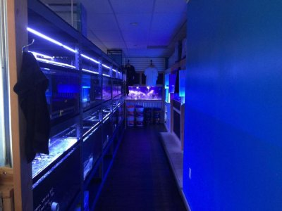 Fish Shopping 101: Tips to Buying a Healthy Fish
