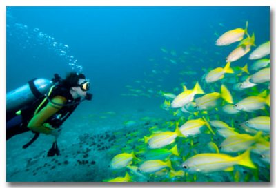 How behaviorally complex are marine fish?