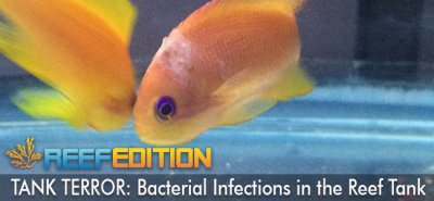 TANK TERROR: Bacterial Infections In The Reef Tank