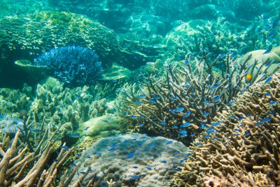 Diverse-coral-community-on-the-Great-Barrier-Reef-000077063003_Small.jpg