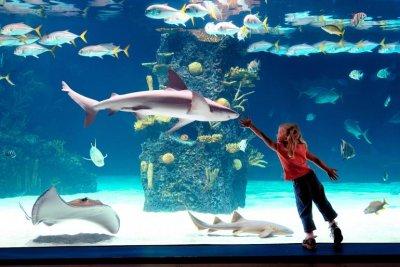 NewportAq_Girlglass_Newport Aquarium.jpg
