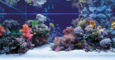 Tips and Tricks on Creating Amazing Aquascapes