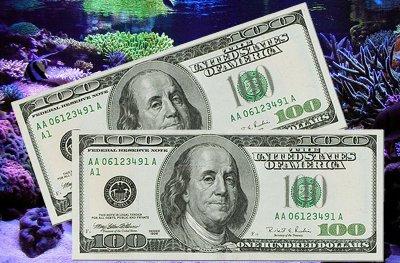 Show Me The Money Contest: Win $200!