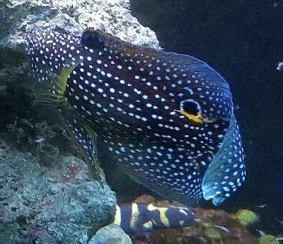 Gupp-tastrophe: My misguided run at feeder fish breeding