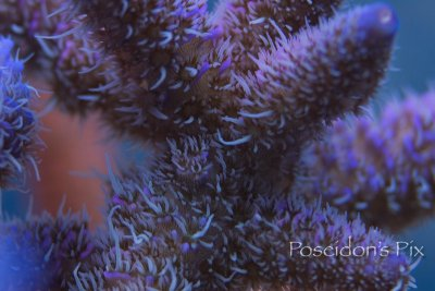 What extension tubes do.