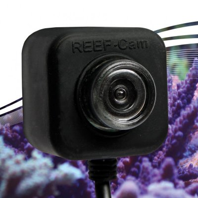 The NEW IceCap REEF-Cam is HD and goes underwater!