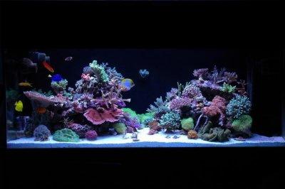 "Reef Spotlight - May 2010 - ""NVTE"""