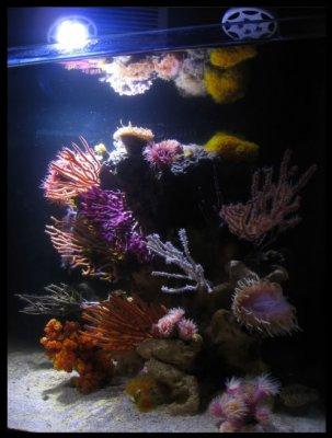 """Reef Spotlight - July 2010 - """"Aquabacs"""""""