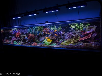 R2R Reef of the Month Spotlight: Júnio Melo - February 2017