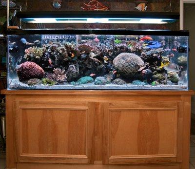 """Reef Spotlight - June 2010 - """"Brad Syphus"""""""