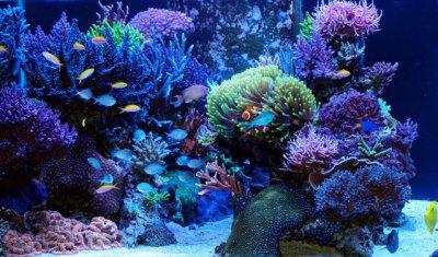"""Reef Spotlight - April -2011 - """"2Sunny"""""""