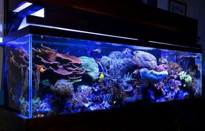 """Reef Spotlight - September 2011 - """"Luisgo"""""""