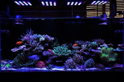 "Reef Spotlight - November 2011 - ""Acrotrdco"""