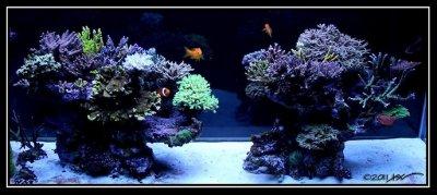 "Reef Spotlight -December 2011 - ""Sweetride"""