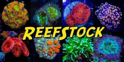 reefstock-frag-tiles.jpg