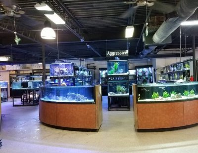 What to look for when buying fish at your LFS