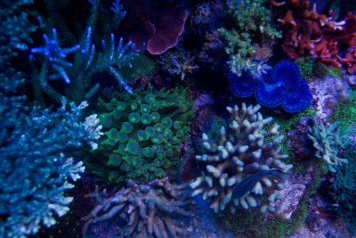 Corals and Their Behavior: A Hobbyist Perspective
