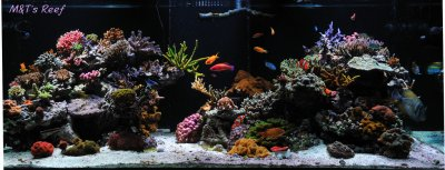 "Reef Spotlight - March 2012 - ""Mike & Terry"""
