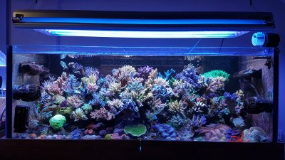 R2R Reef of the Month Spotlight: Tamama - April 2017