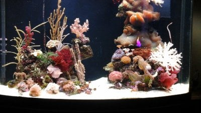 Keeping Seahorses in Aquaria #1 - Introduction and Setting Up Your Seahorse Tank