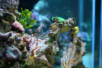 Keeping Seahorses in Aquaria #2 - Aquascaping and Providing Excellent Water Quality