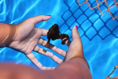 Keeping Seahorses in Aquaria #4 - Selecting Your Ponies