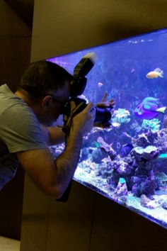 Your Guide to Aquarium Photography #1 - Getting the Basics