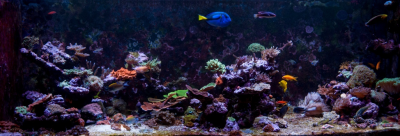 Your Guide to Aquarium Photography #2 - Preparing for a Photoshoot
