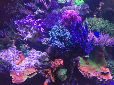 Stability and Consistency of a Reef Tank
