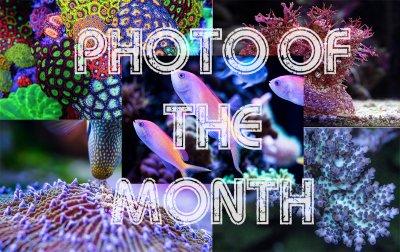 July, 2017 Photo of the Month Contest (POTM) - Acropora
