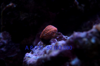 Your Guide to Aquarium Photography #3 - Settings for Fish, Coral, and FTS Photos