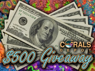 Corals Depot $500 Coral Giveaway and $250 to your favorite local fish store or online coral retailer