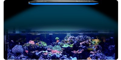 CLAIMED - Boom Corals Kessil AP700 Giveaway