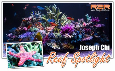 A R2R Reef Spotlight: Bring the Reef Home By Joseph Chi