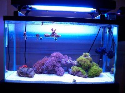 Coral/Invert Quarantine Time Frames